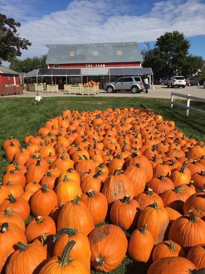 Pumpkins from The Farm of Westmont that will be used in a River Hawk Brewing Pumpkin Ale