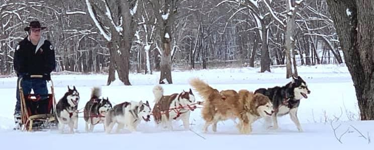 Sled being pulled by dogs in the winter