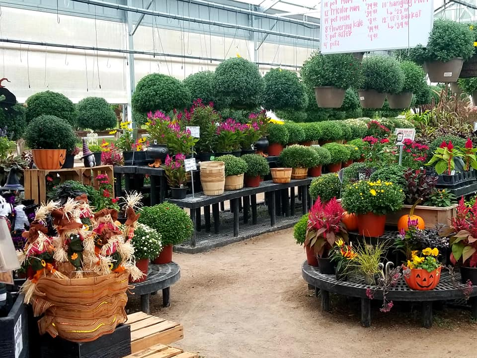 a green house filled with flowers and plants