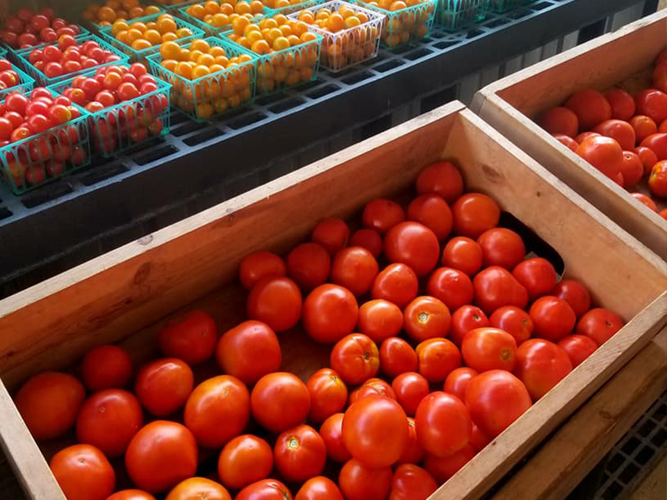 crates of fresh red and yellow cherry tomatoes and regular tomatoes