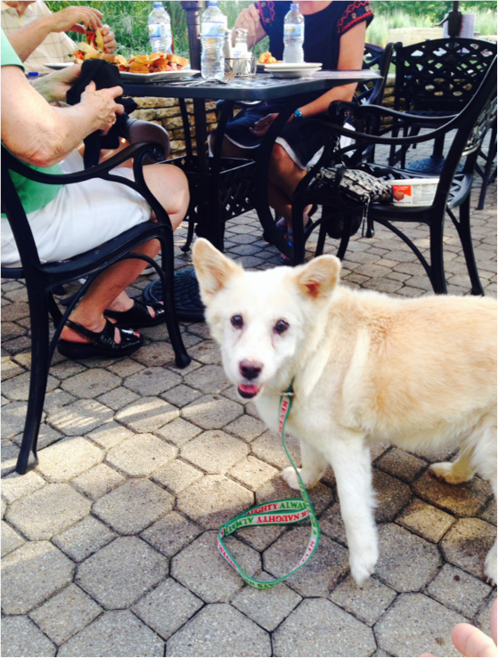 Dog sitting next to table of people at the public landing in lockport