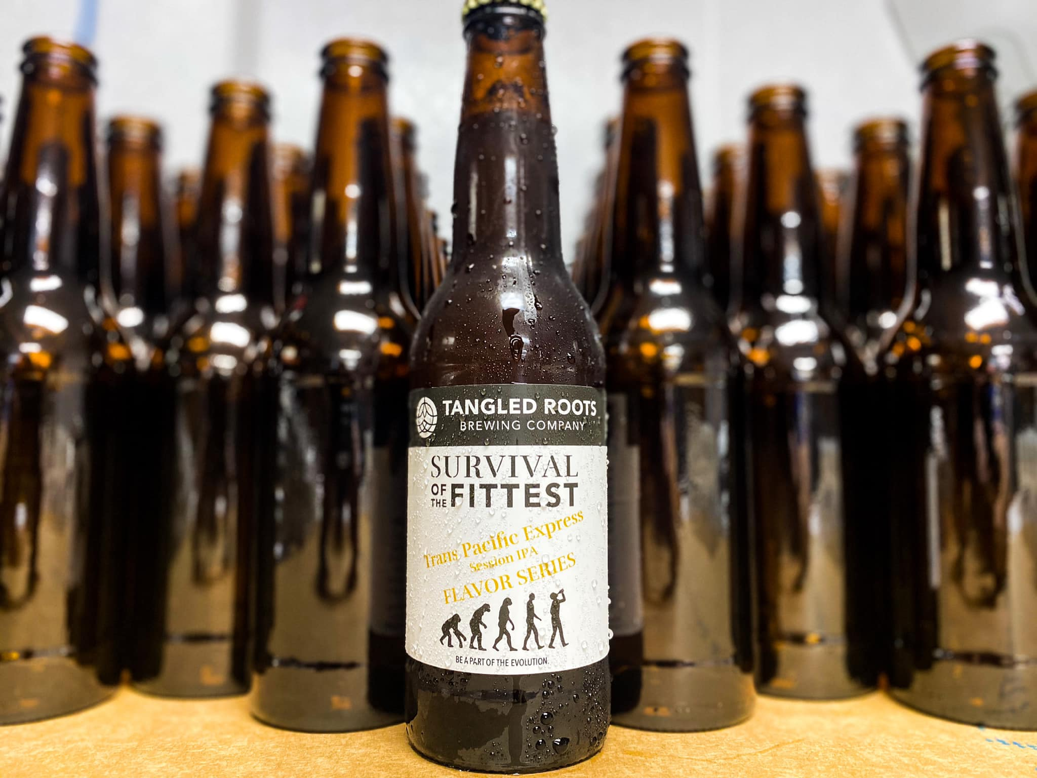 several bottles of Tangled Roots beer